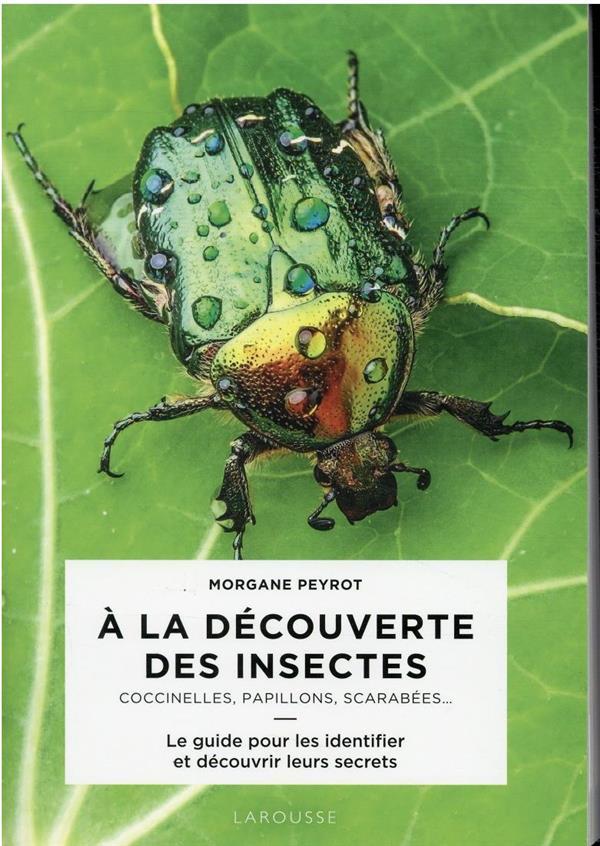 A LA DECOUVERTE DES INSECTES : COCCINELLES, PAPILLLONS, SCARABEES...