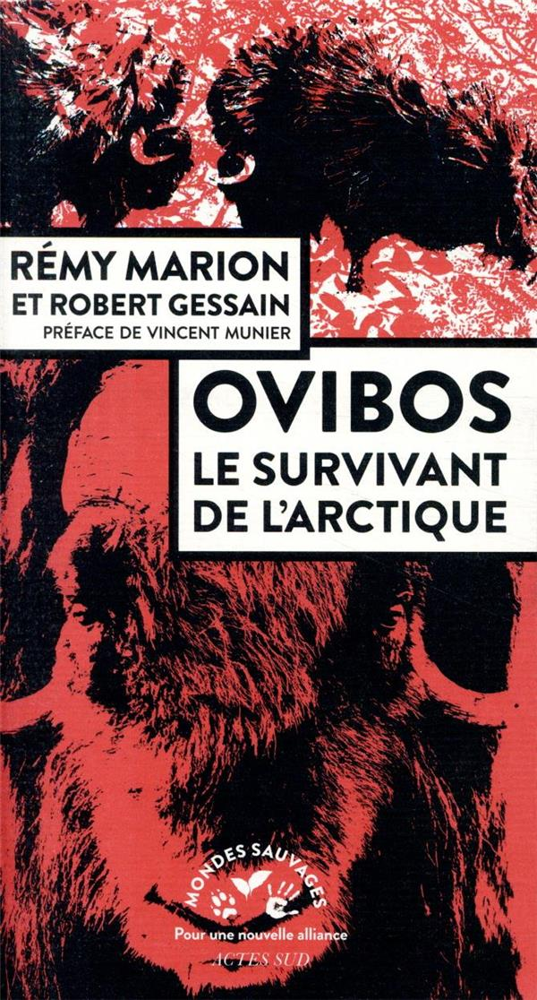 OVIBOS - LE SURVIVANT DE L-ARCTIQUE