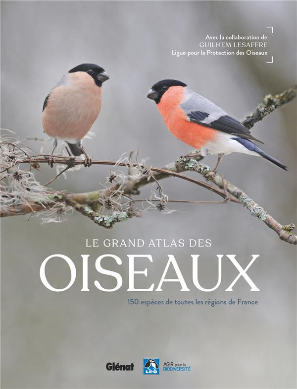 LE GRAND ATLAS DES OISEAUX : 150 ESPECES DE TOUTES REGIONS DE FRANCE LESAFFRE, GUILHEM GLENAT