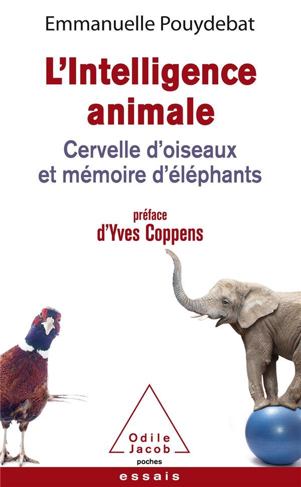 L'INTELLIGENCE ANIMALE  -  CERVELLE D'OISEAUX ET MEMOIRE D'ELEPHANTS